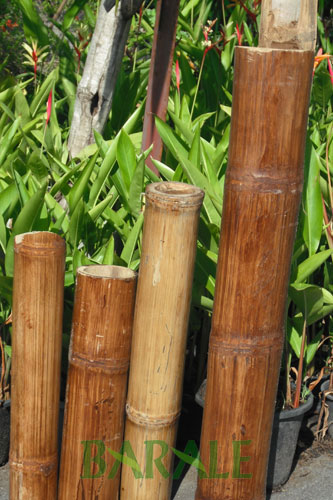barale bamboo import e distribuzione canne di bamboo per